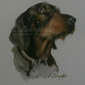 Smooth-haired dachshund - 40x30 cm.